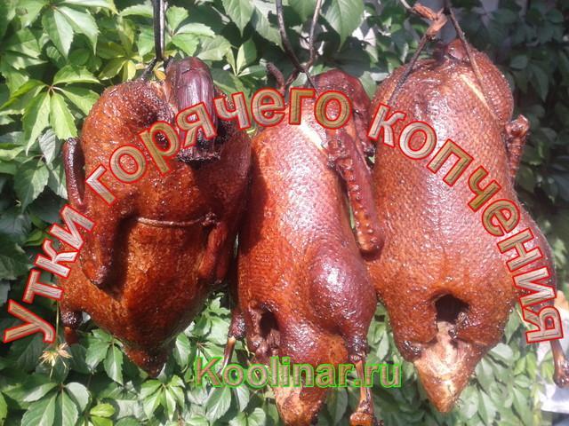 Утка горячего копчения – пошаговый рецепт с фотографиями
