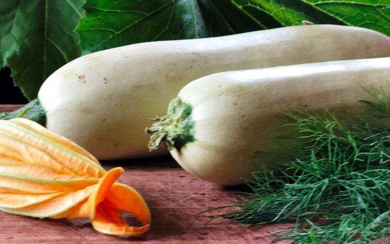 Кабачковые оладушки очень вкусный, старинный рецепт