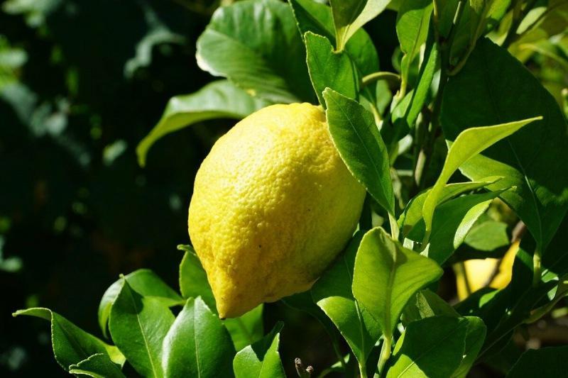 О пользе лимона в быту